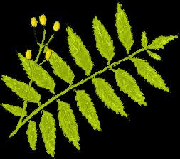 Ayurvedic Leaf